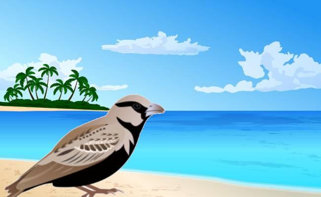 పిచ్చుక సాహసం కథ   Story of Sparrow Adventure